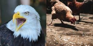 1000 Partner in 90 Tagen - Huhn oder Adler